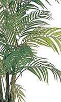 Areca Silk Palm Tree, 48 inches High