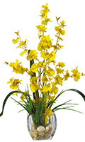 Yellow Dancing Lady Silk Orchid, 19 High